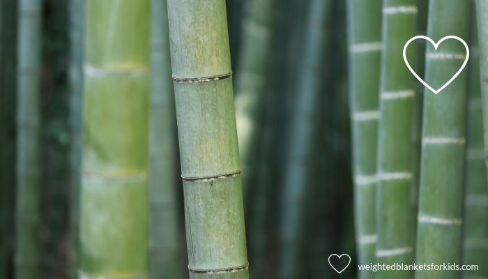A photo of bamboo. Photo by kazuend on Unsplash.